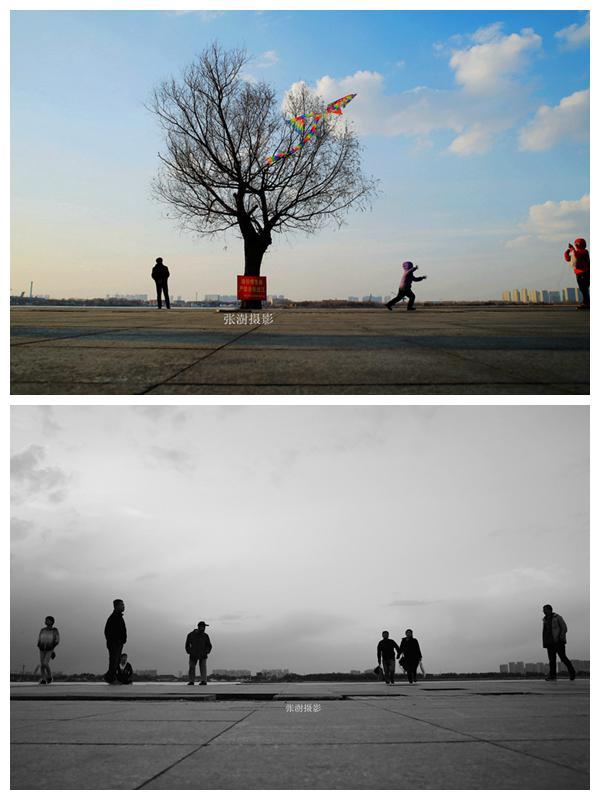 哈尔滨 松花江边那棵沉默的树 今天已看不见他老态龙钟的身体