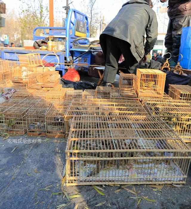 哈尔滨 大量三有动物鸟市交易 这种市场急需整顿